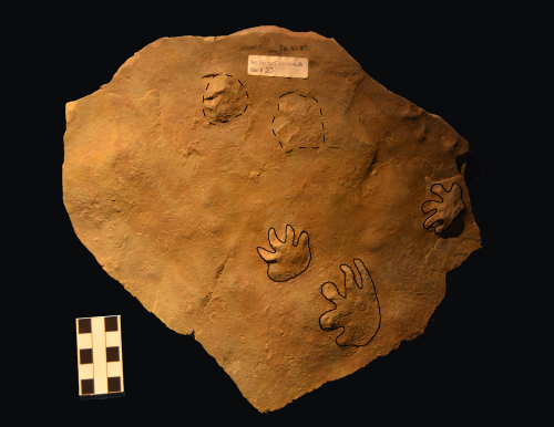 Fossil footprints outlined