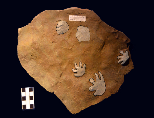 Fossil footprints shaded